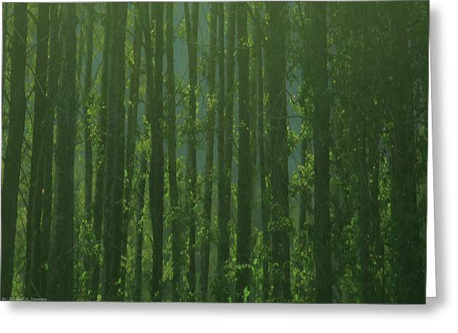 Seward Woods Greeting Card