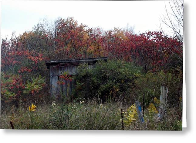 Shack In The Fall Greeting Card by Angelika MacDonald