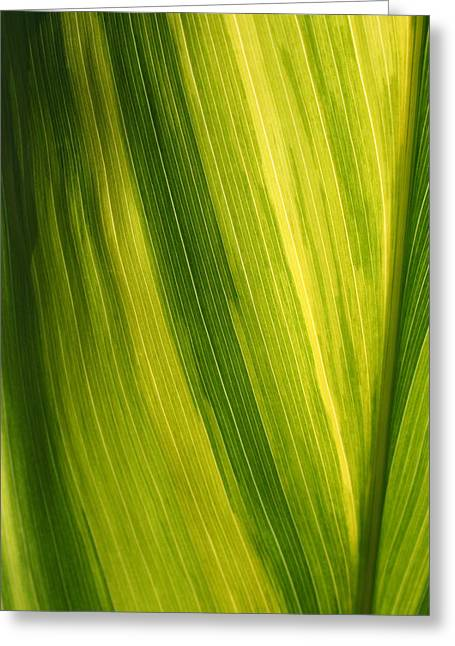 Shades Of Green Greeting Card by Ken Riddle