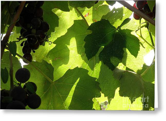 Greeting Card featuring the photograph Shadow Dancing Grapes by Lainie Wrightson