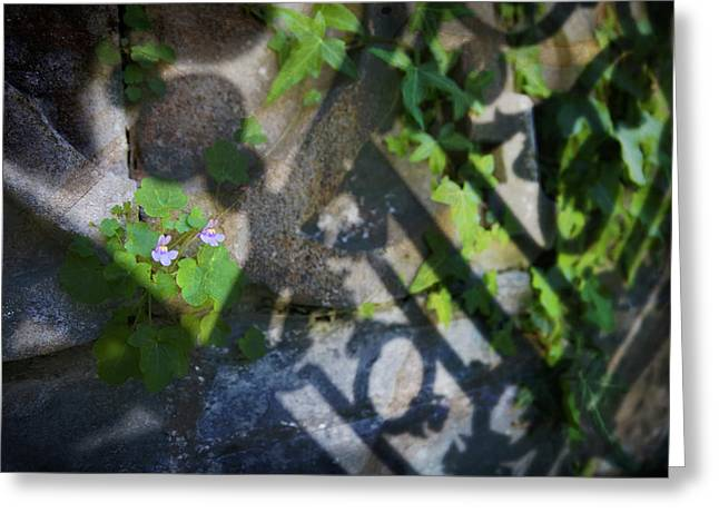 Greeting Card featuring the photograph Shadow Garden by Richard Piper