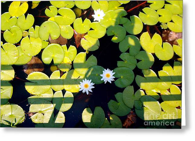 Greeting Card featuring the painting Shadow Lilies by Gretchen Allen