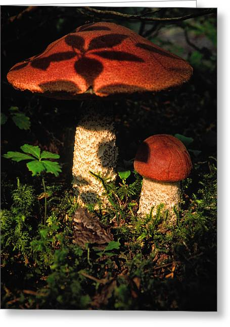 Shadow Of Leaves On A Mushroom Greeting Card by Robert Postma