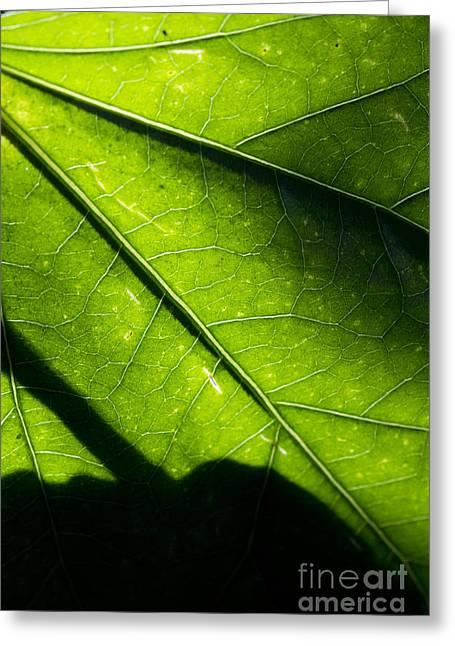 Shadow On Leaf -2 Greeting Card