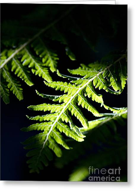 Shadow On Leaf -7 Greeting Card