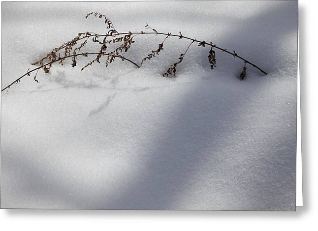 Greeting Card featuring the photograph Shadow On Snow 2 by Tad Kanazaki