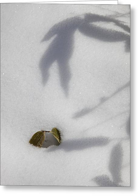 Greeting Card featuring the photograph Shadow On Snow by Tad Kanazaki