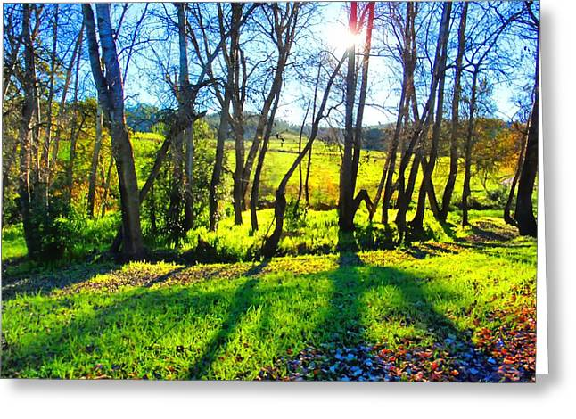 Shadow Play Greeting Card by Michael Durst