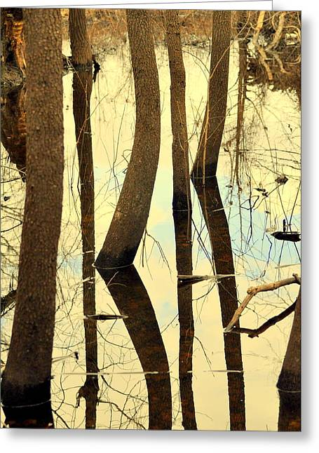 Shadow Trees Greeting Card by Marty Koch