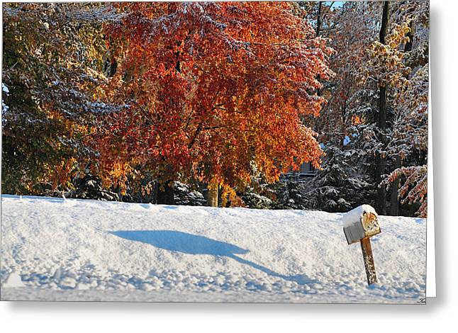 Shadows In The Snow Greeting Card by Kimberly Little