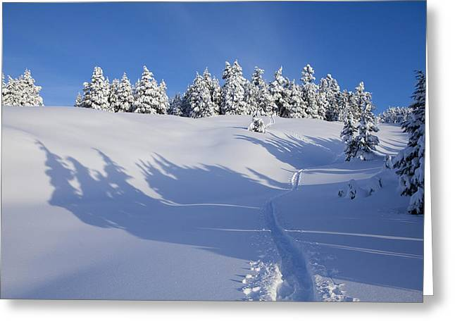 Shadows On The Trail Greeting Card by Tim Grams
