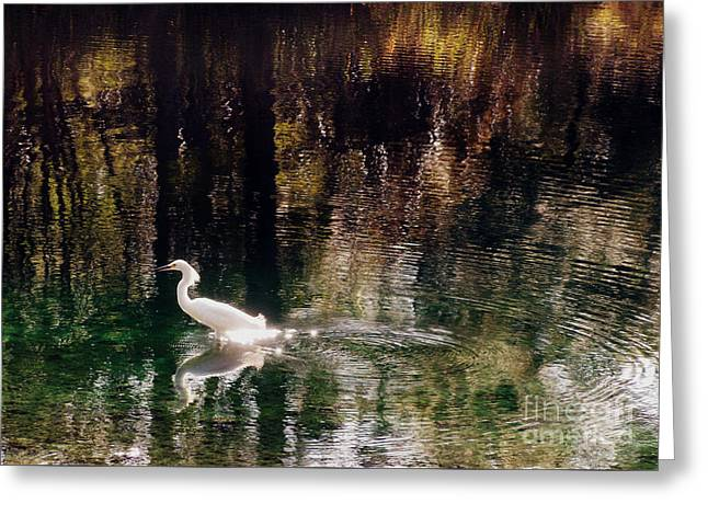 Greeting Card featuring the photograph Shadowwaters by Lydia Holly