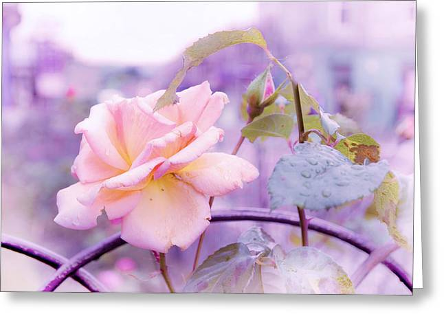 She Like The Ghost Beside Me. Scottish Rose Greeting Card by Jenny Rainbow