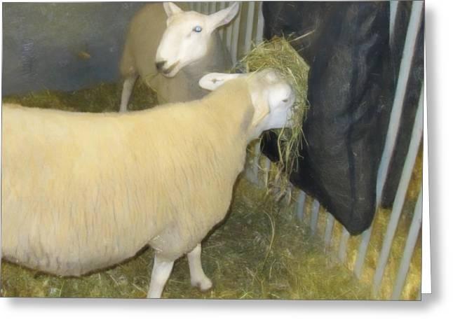 Sheep Eating Greeting Card