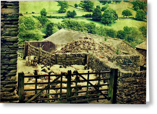 Sheep Gate Greeting Card by Linde Townsend