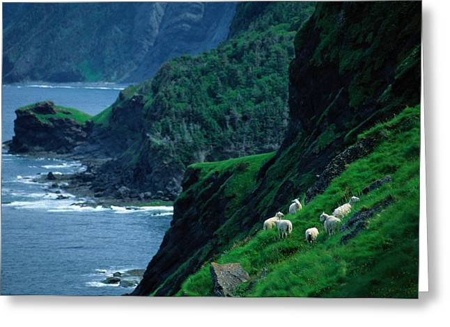 Sheep Graze Along The Steep Banks Greeting Card
