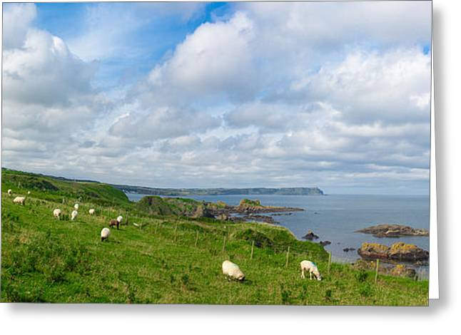 Sheep On A Hill Greeting Card by Semmick Photo