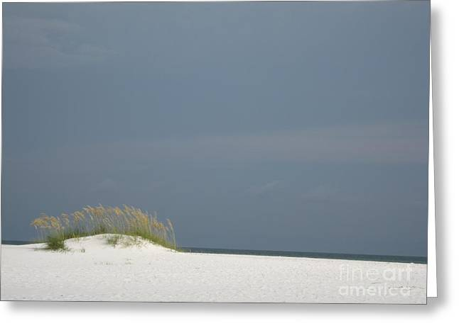 Shell Island Dune Greeting Card by Jan Prewett