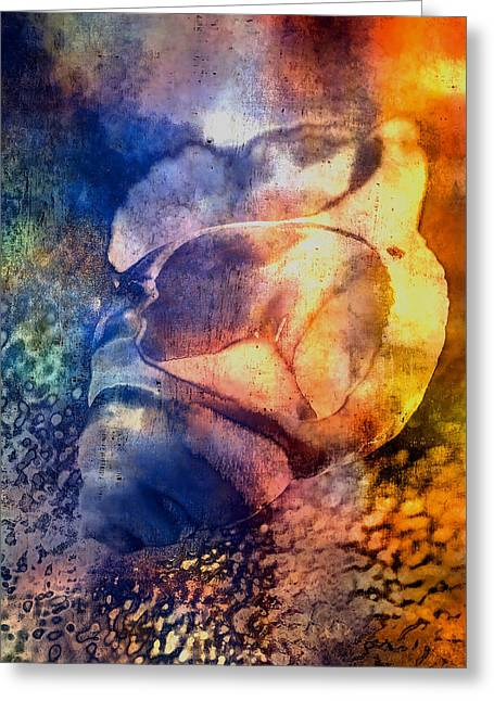 Shell Greeting Card by Mauro Celotti