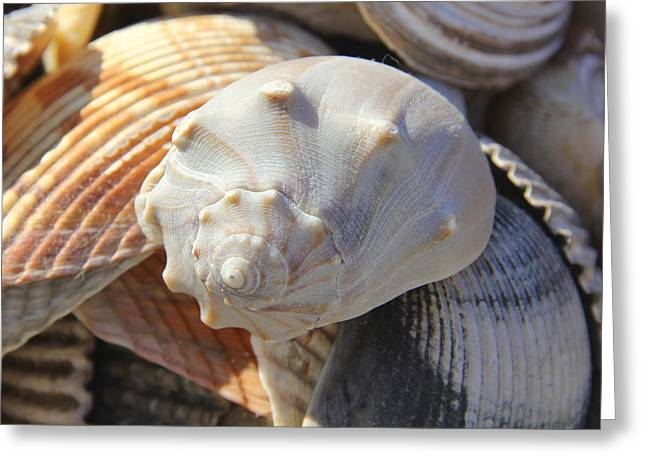 Shells 2 Greeting Card by Mike McGlothlen