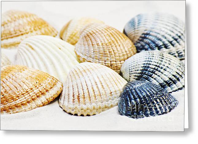 Shells Greeting Card