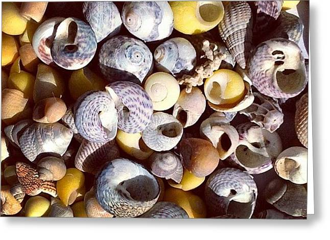 Shells From Brittany Greeting Card