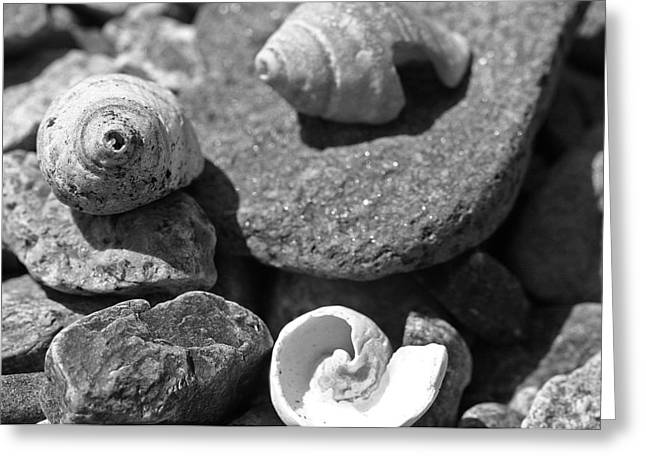 Shells I Greeting Card by David Rucker