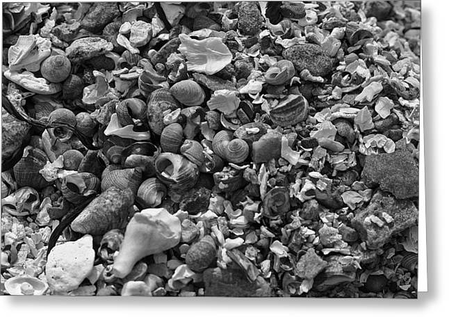 Shells Iv Greeting Card by David Rucker