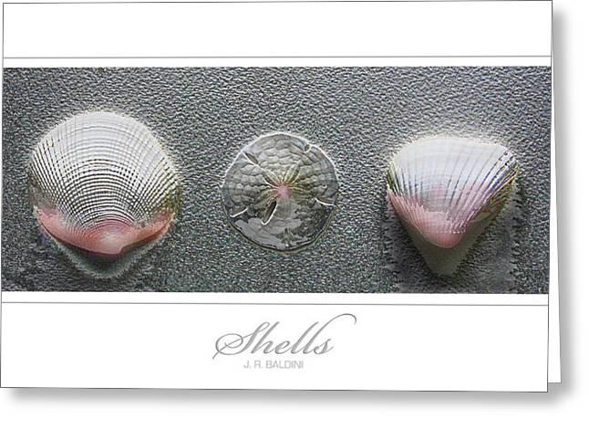 Shells Greeting Card by J R Baldini