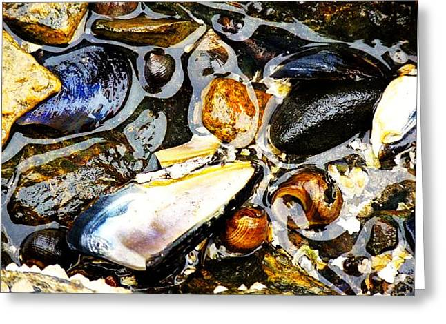 Greeting Card featuring the photograph Shells by Kelly Reber