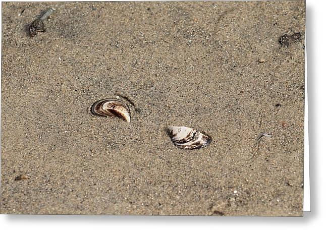 Shells On A Beach Greeting Card by Rebecca Frank