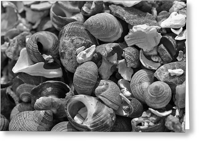Shells V Greeting Card by David Rucker