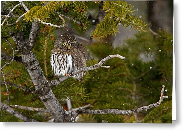 Shelter From The Storm Greeting Card by Sandy Sisti