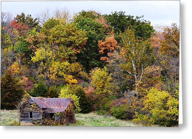 Shelter In The Fall Woods Greeting Card