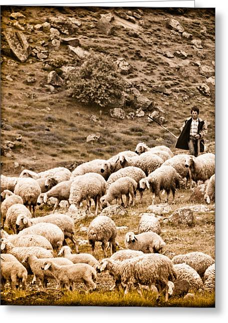 Guzelyurt, Turkey - Shepherd Greeting Card
