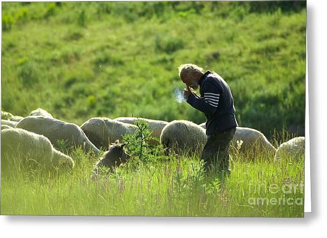 Shepherd Greeting Card by Odon Czintos