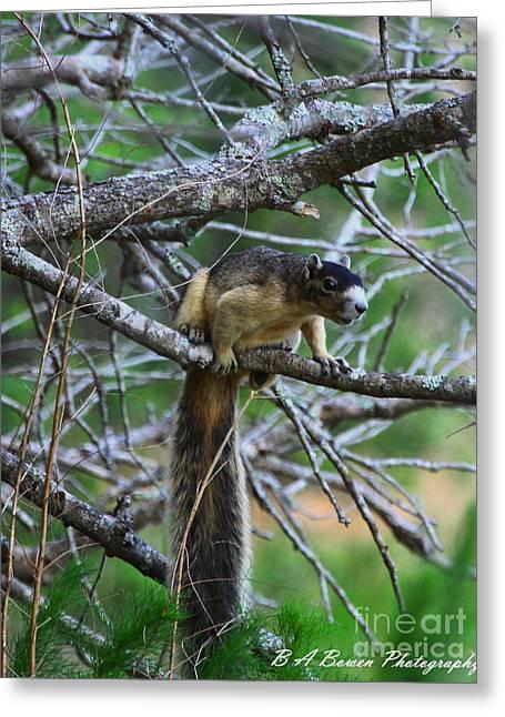 Shermans Fox Squirrel Greeting Card