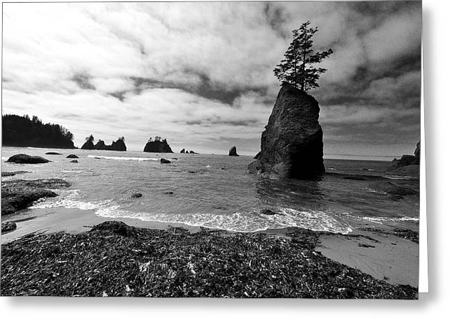 Shi Shi Beach Greeting Card by Ian Stotesbury