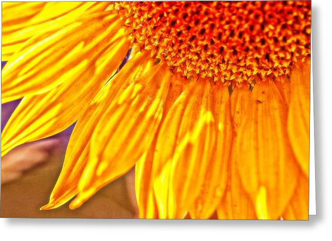 Shining Sunflower Greeting Card
