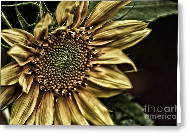 Shinning On You Greeting Card by Tamera James