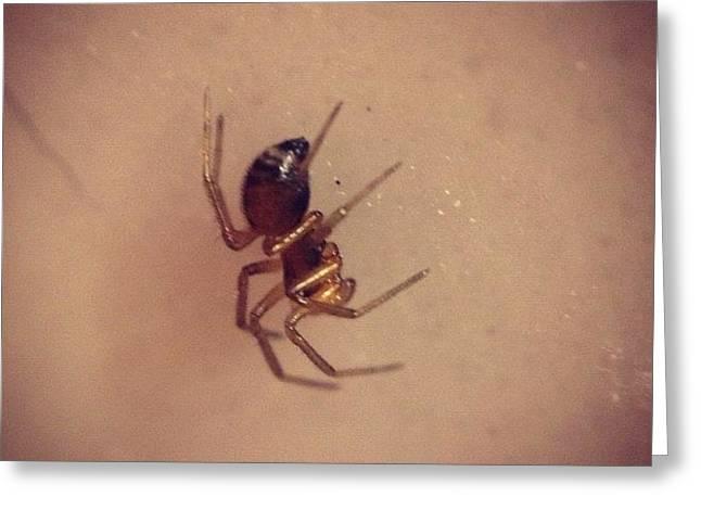 #shiny #golden #tiny #spider #macro Greeting Card