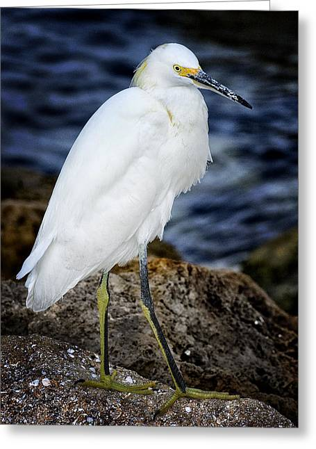 Shore Bird Greeting Card by Ercole Gaudioso