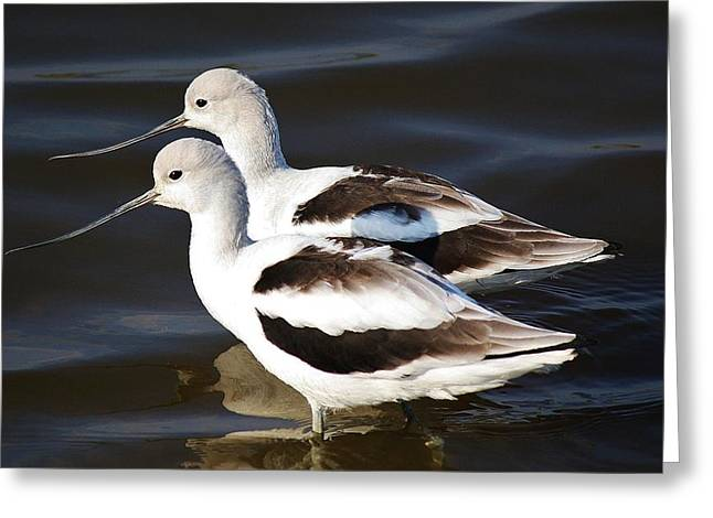 Shore Birds Greeting Card by Paulette Thomas