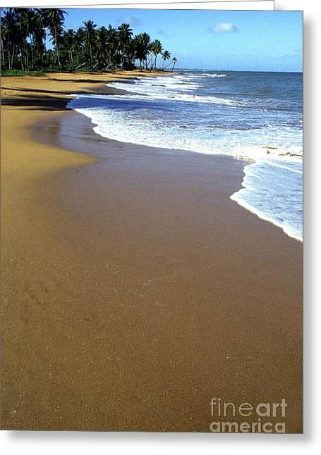 Shoreline Along Pinones Greeting Card by Thomas R Fletcher