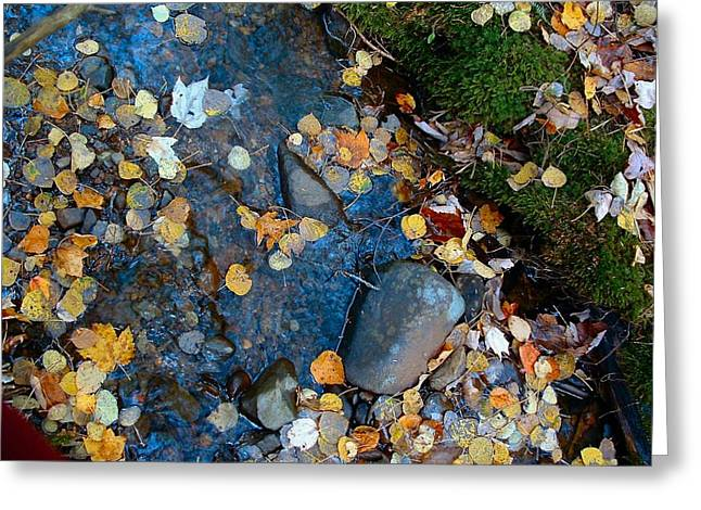 Shorelines - Campbell Creek Greeting Card