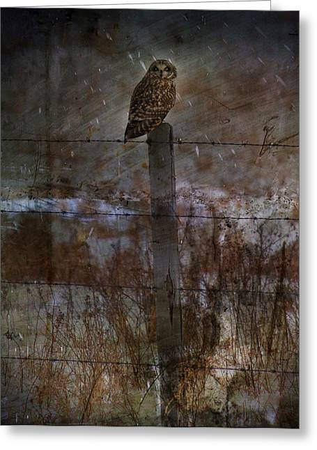 Short Eared Owl Greeting Card by Empty Wall
