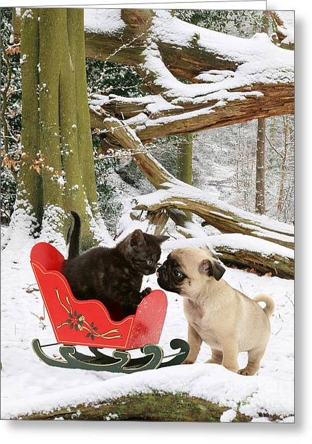 Shorthair Kitten And Pug Greeting Card by Jane Burton