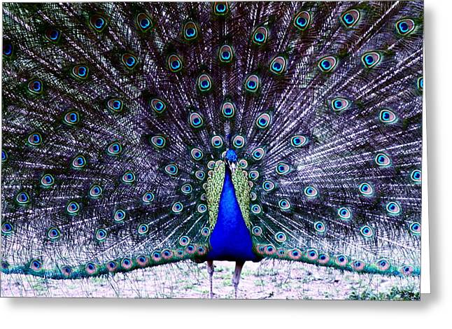 Showoff Greeting Card by Eric Chapman