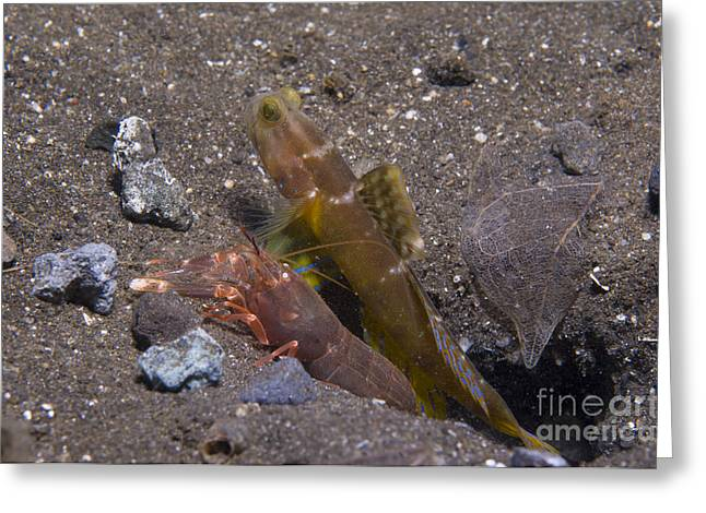 Shrimp Goby And Snapping Shrimp Look Greeting Card