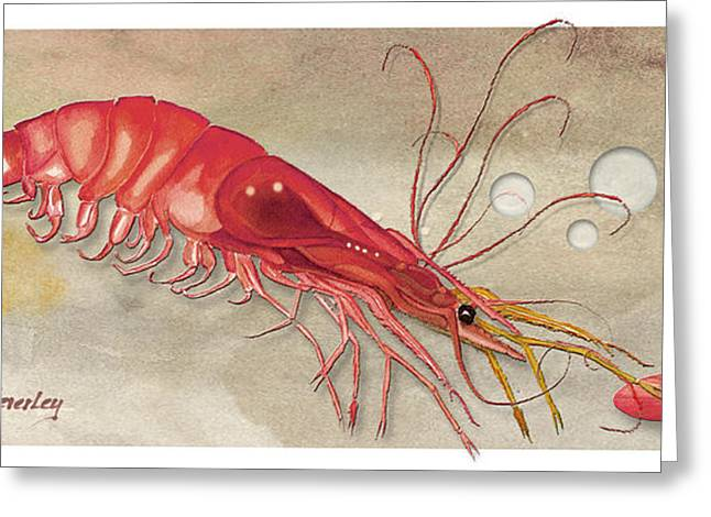 Greeting Card featuring the painting Shrimp With Red Shell by Anne Beverley-Stamps